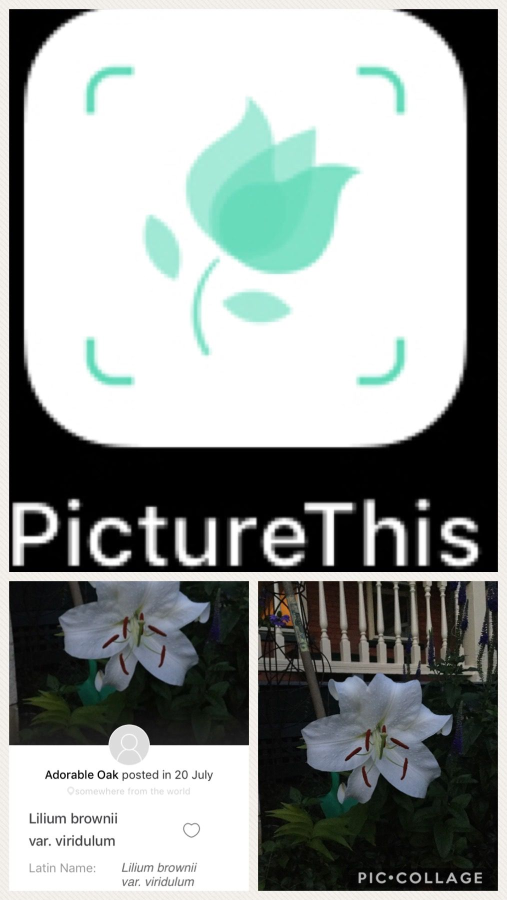 PictureThis is a great app to use for identifying plants