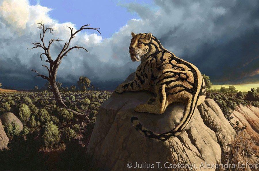 Oligocene Hoplophoneus Csotonyi Lefort. Prehistoric big