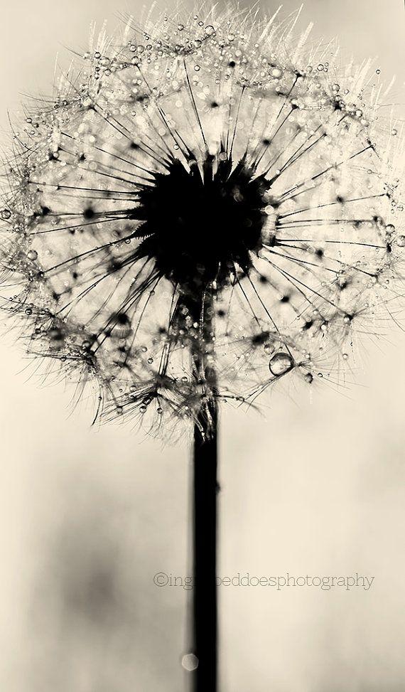 Dandelion print dandelion wall art black and white dandelion