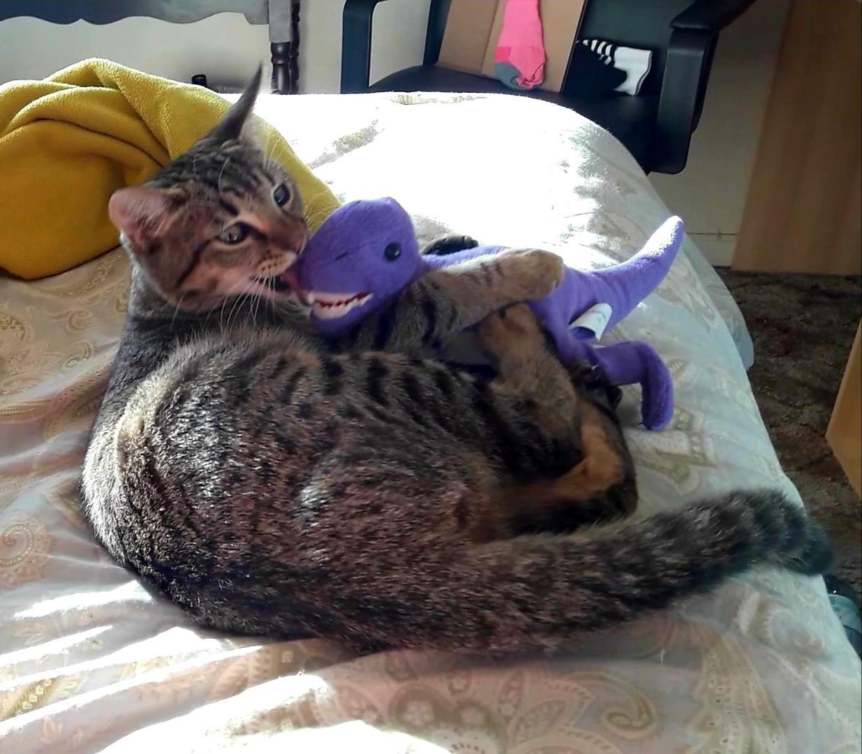 April S Favorite Toy Dinosaur Cute Animals Neko Cat Cats