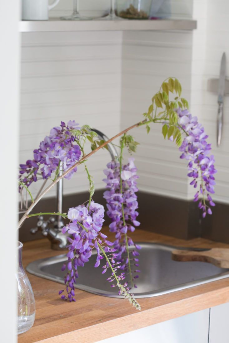 Mysterious Wisteria An Irresistible Flower Goes From Vine To Vase With Images Flowers Purple Flowers Wisteria