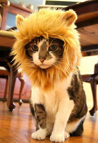 Que gatinho engraçado!