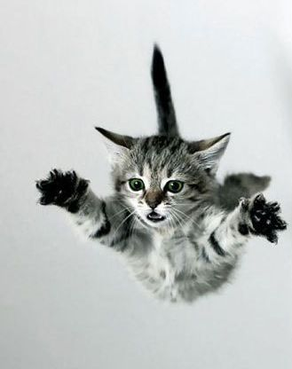 Here I come.  Ready or not!  Flying kitten.