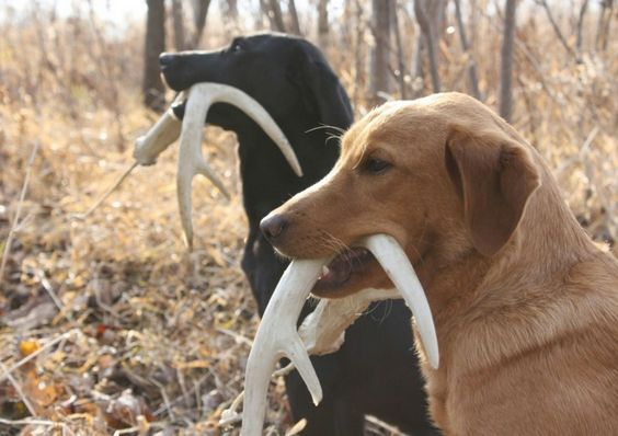 Check Out These Expert Dog Training Tips Dog Training Easiest