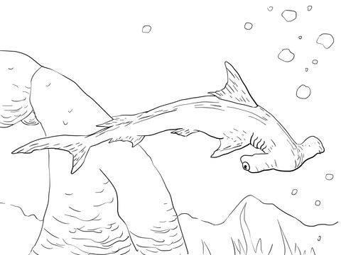 Scalloped Hammerhead Shark coloring page from Hammerhead shark ...