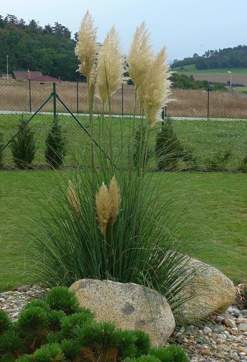 Letztes Jahr hatte das Gras eine Blume in diesen J-Garden Design-Ideen