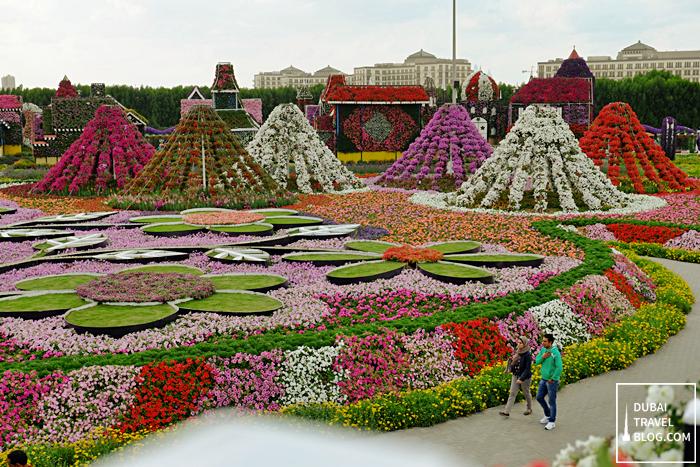 dubai miracle garden display fav pinterest