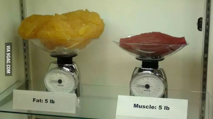 Five Pounds 2 5 Kg Of Fat Compared To Five Pounds Of Muscle
