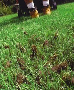 When Does A Lawn Need Aeration Lawn Care Tips Lawn Care Lawn