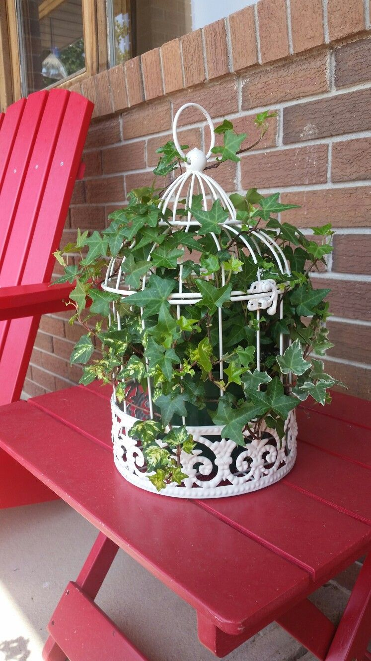 3 kinds of ivy planted in small bird cage that I spray painted with cream colored Rustoleum. #smallbirds