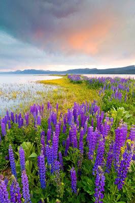 احلى صور ورد شيك In 2020 Wild Flowers Lake Tahoe Tahoe