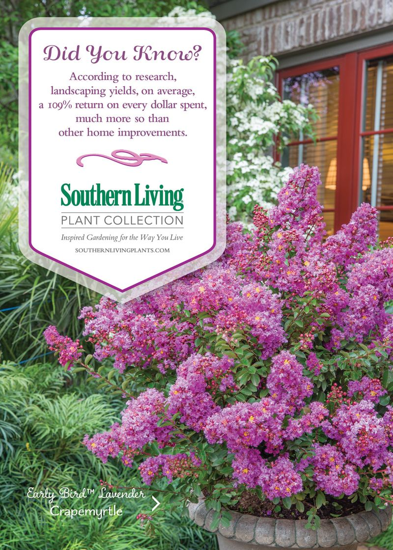 Get Inspired With The Southern Living Plant Collection Garden