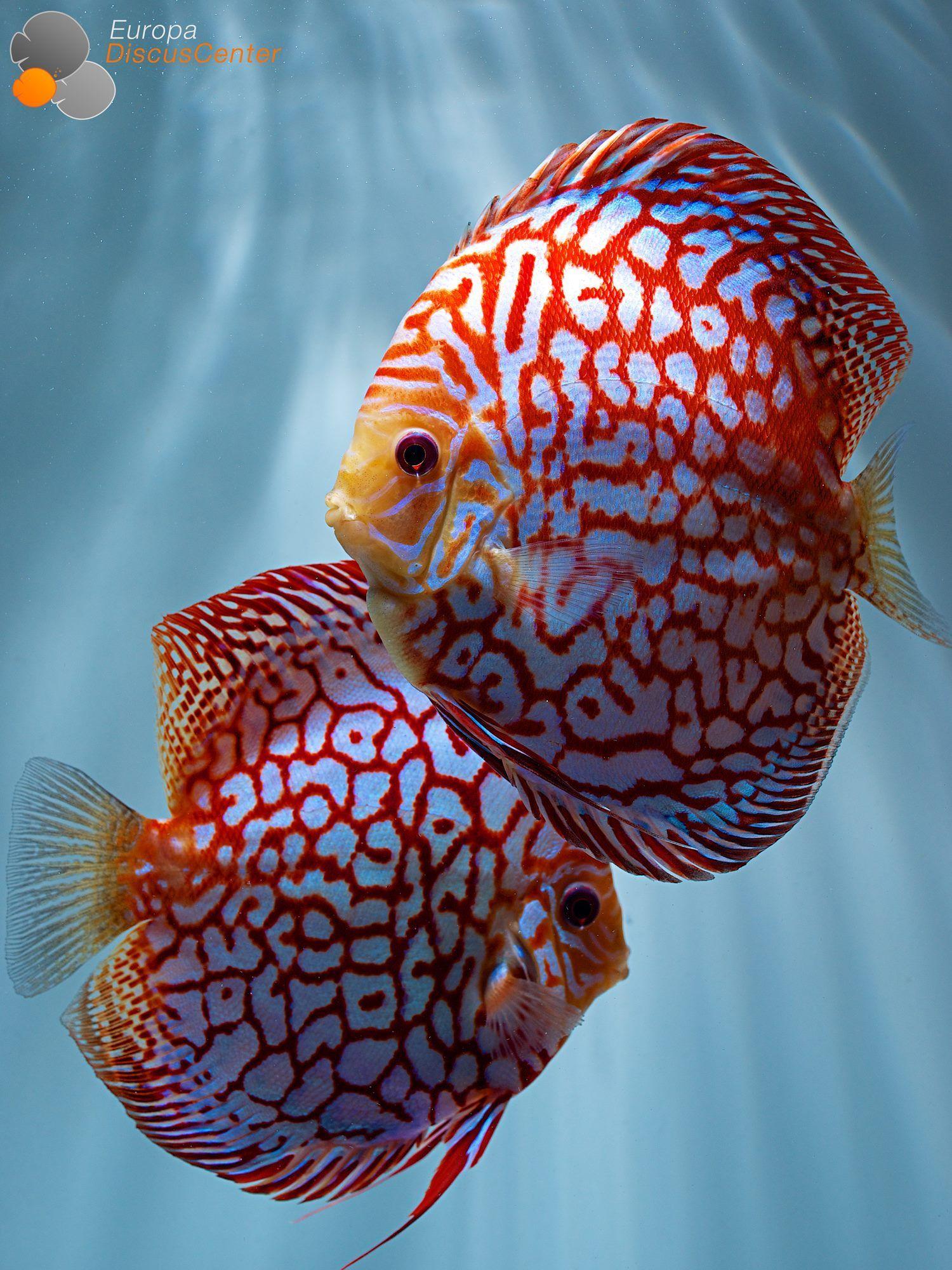 3337f60cba0d82fa1010d781943a2af2 Luxe De Crevette Aquarium Des Idées