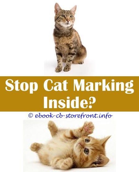 8 Creative Clever Ideas How To Make Catnip Spray For Cats Cat