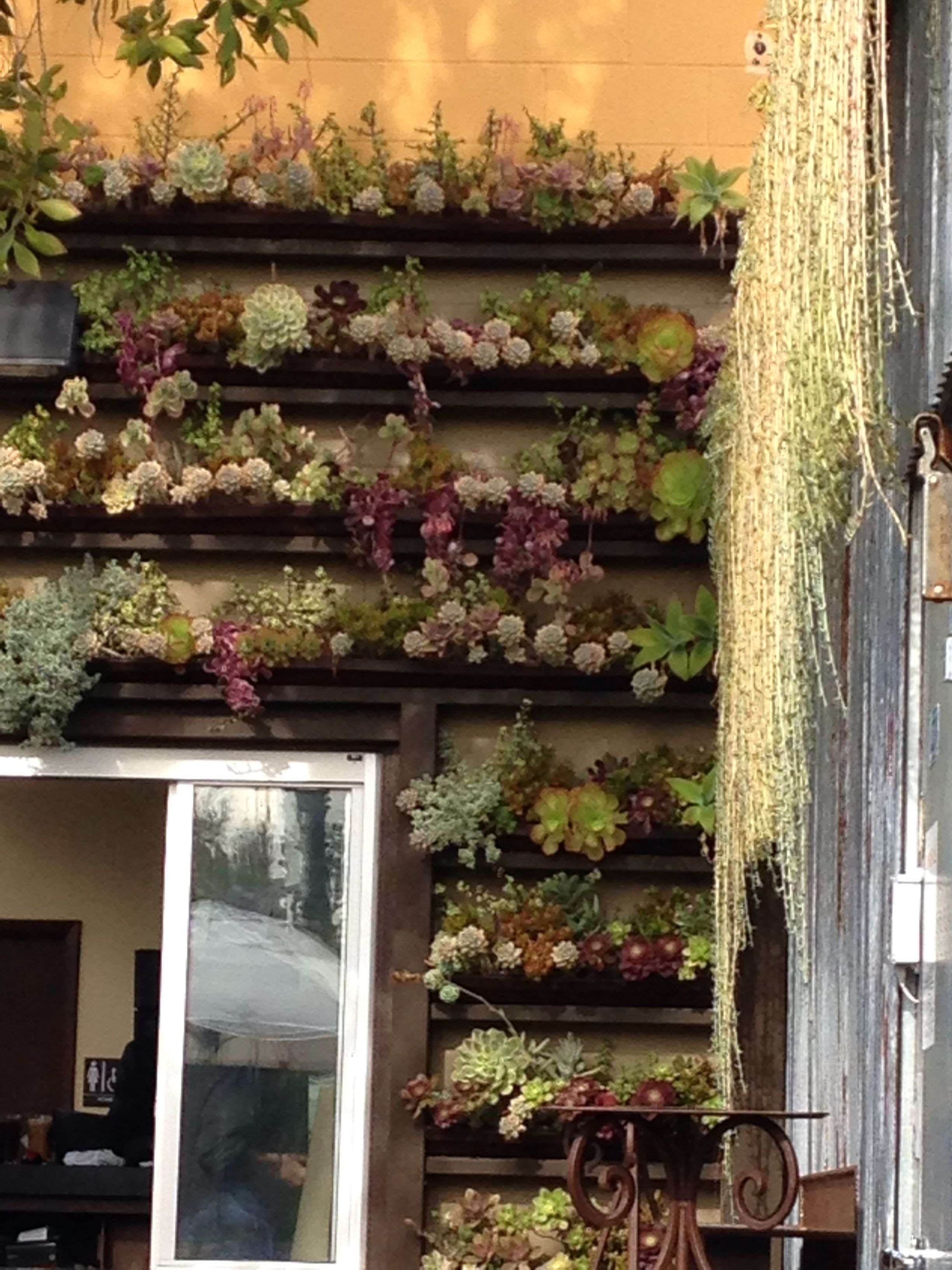 Wall of succulents planted in rain gutters. Oceanside, CA Stone ...