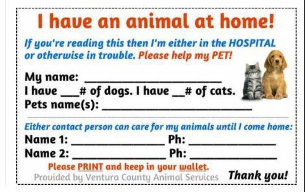 Pin By Sonja Ballard On Dogs Pet Emergency Diy Pet Care Diy Stuffed Animals