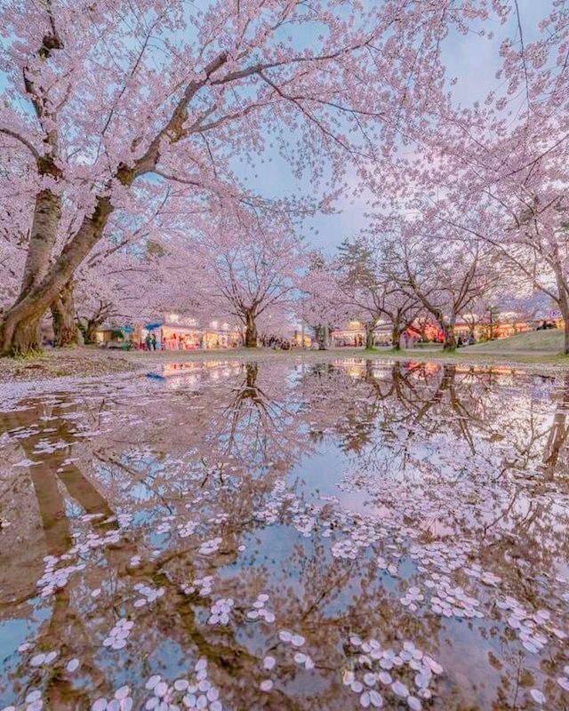 Pin By Gulin Ertuna On Cherry Blossoms Beautiful Nature Beautiful Nature Wallpaper Nature Photography