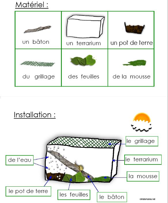 escargots et langages en maternelle petite moyenne et grande sections les animaux pinterest. Black Bedroom Furniture Sets. Home Design Ideas