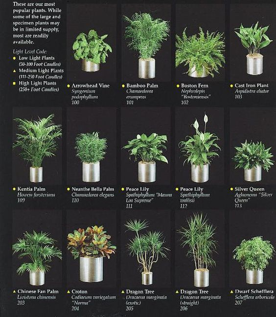 Indoor Plants For Office Makeover Ideas Healthy A List Of That Could Grace Your Desk And Improve Health