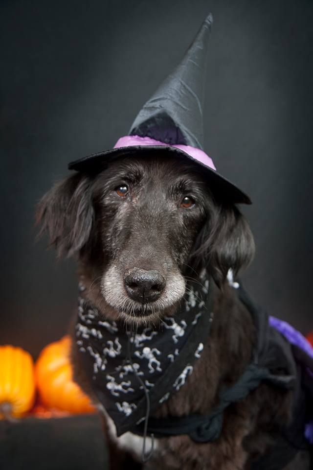 The Sanctuary For Senior Dogs Fb Animali