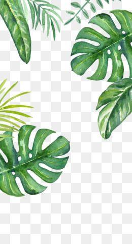 Free Download Banana Leaf Wallpaper Green Background Png 564 1001 And 0 54 Mb Poster Bunga Ilustrasi Daun Pola Bunga