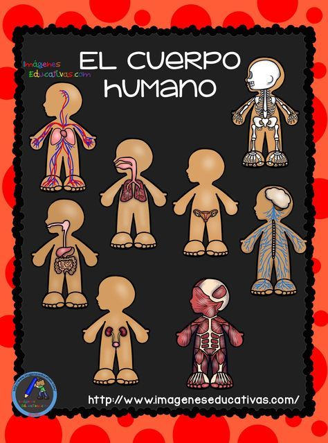 El Cuerpo Humano Aparatos Y Sistemas Para Primaria Con Imagenes