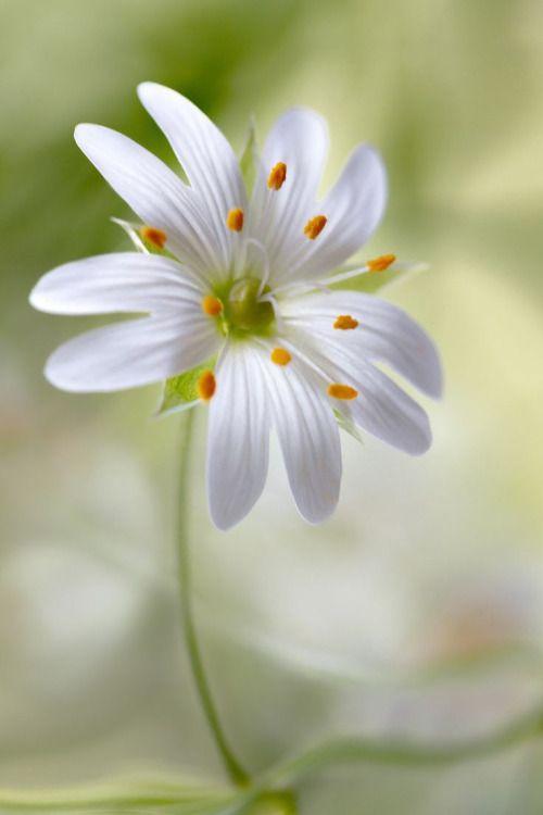 mandy flore