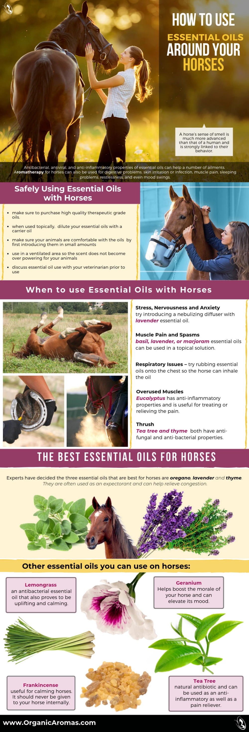 How To Use Essential Oils Around Your Horses Horse Massage Essential Oils For Massage Oils