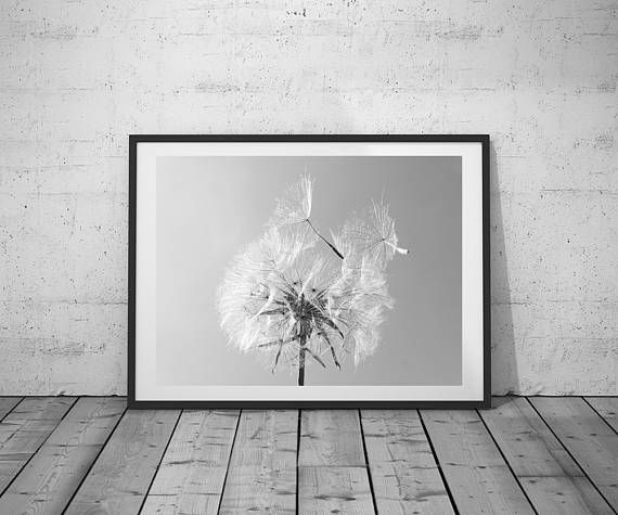 Flower Photography Dandelion Wall Art Print Black White Photo Printable Poster Digital Download 3 Jpg S Wall Art Prints Dandelion Wall Art Flowers Photography