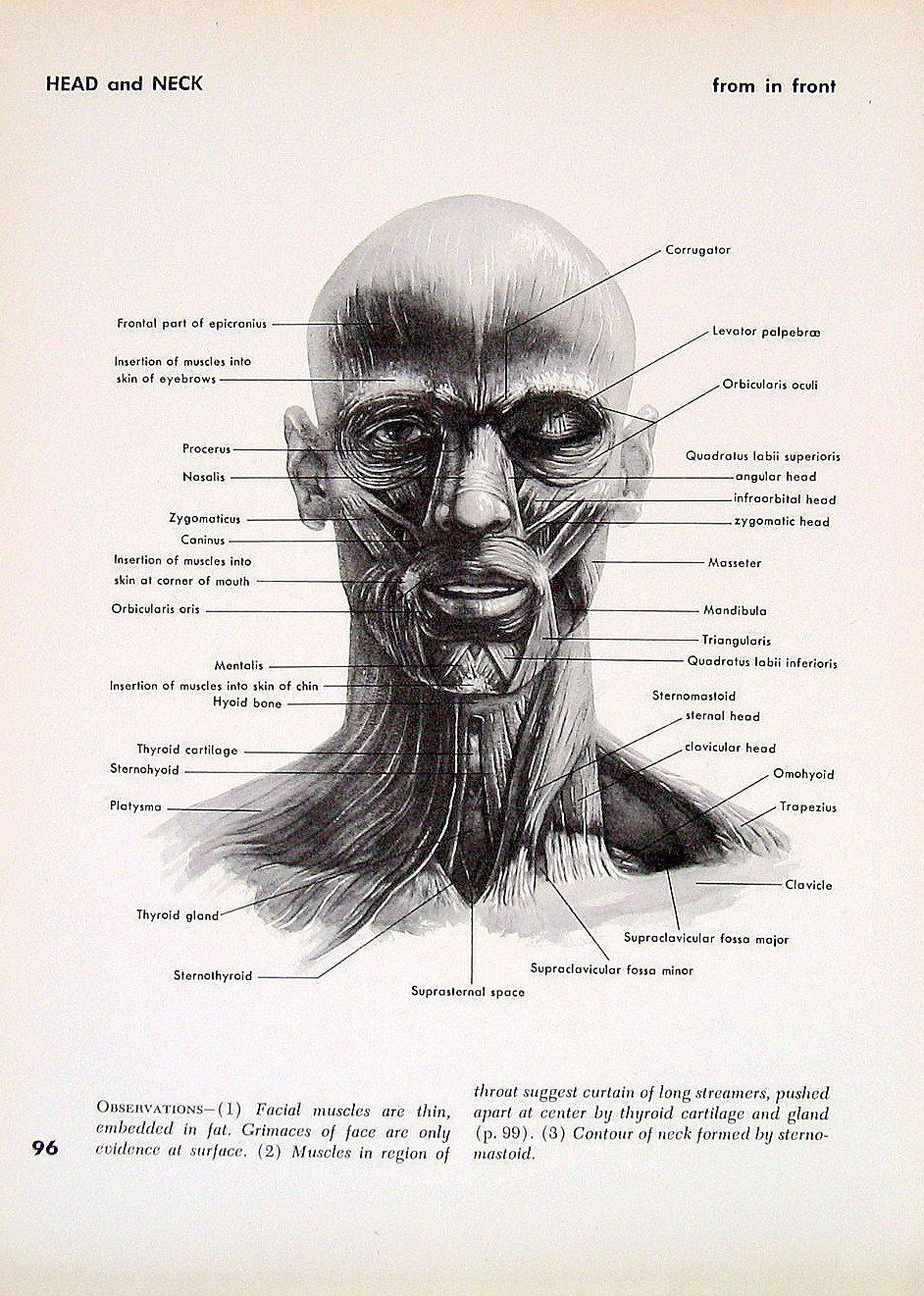 Head and Neck Anatomy - 1951 Vintage Anatomy Book Page - Head and ...