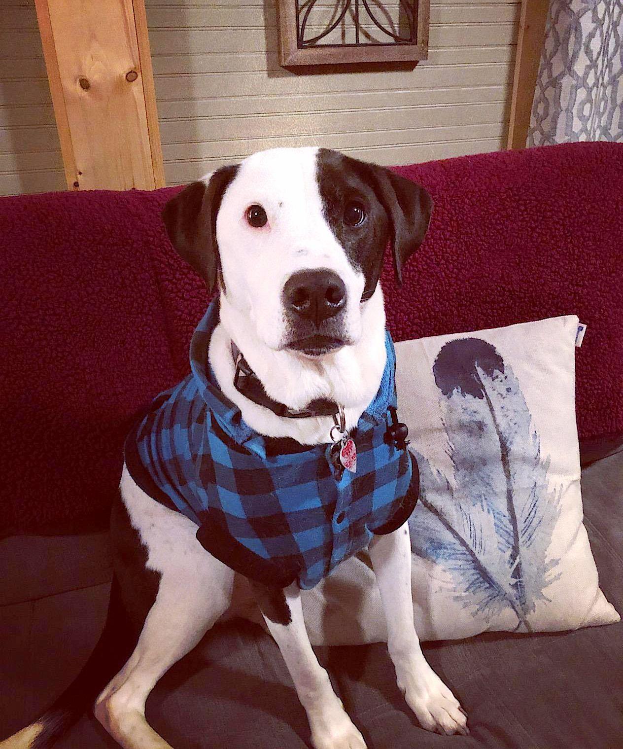 Dog Apparel Thick Plaid Dog Coat 7 Sizes Dog coats, Dog