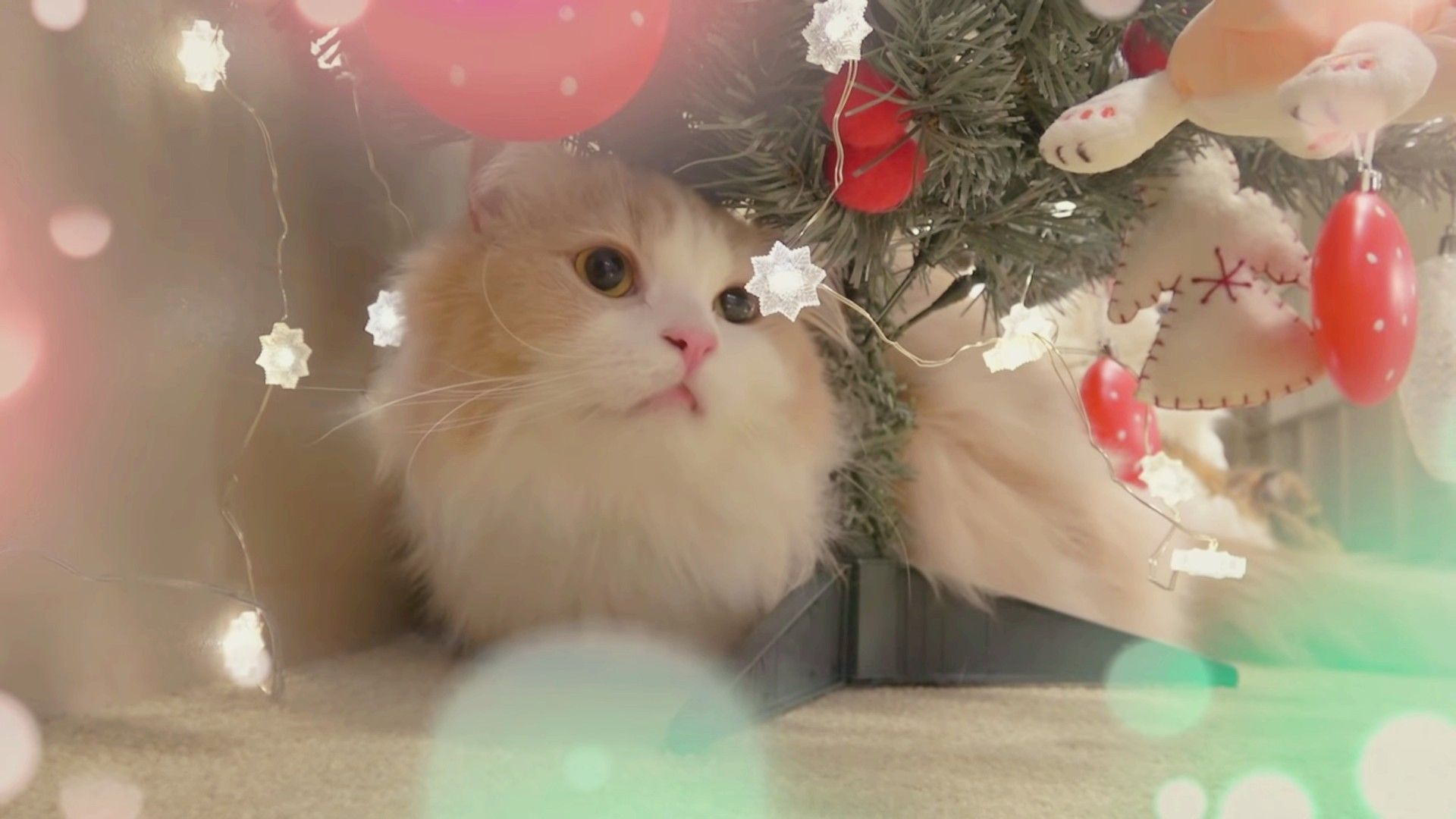Merry Christmas Creamheroes