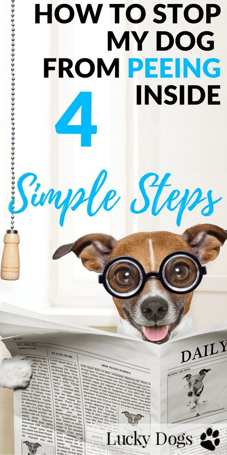 How To Stop My Puppy From Peeing Inside 4 Simple Steps