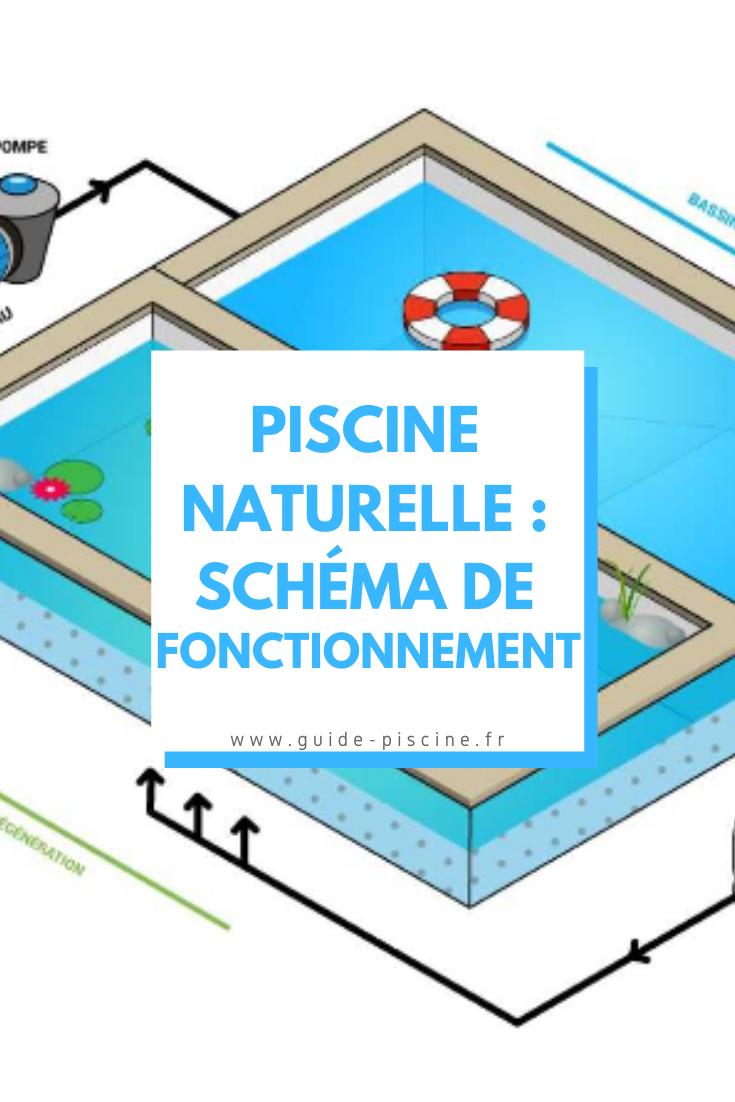 Schema Du Fonctionnement D Une Piscine Naturelle En 2020 Piscine