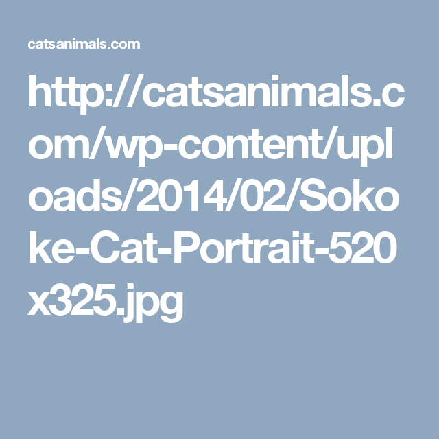 http://catsanimals.com/wp-content/uploads/2014/02/Sokoke-Cat-Portrait-520x325.jpg