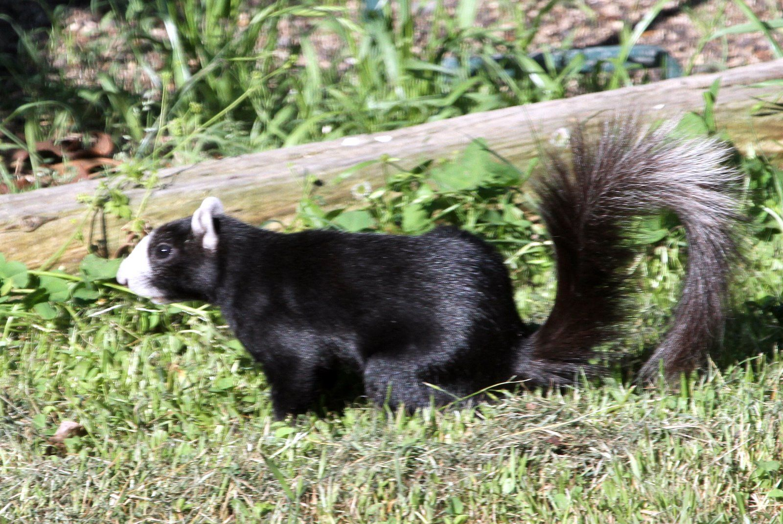 fox squirrels yahoo image search results feathers fins fur