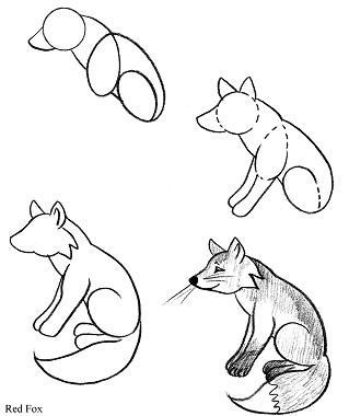 Step By Step Diagram To Draw Red Fox
