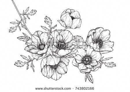 Anemone Flowers Drawing Lineart On Flowersdrawing Flower Drawing Flower Line Drawings Floral Drawing