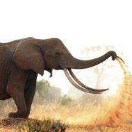 ediHITThttp://www.edihitt.com/noticia/animais-e-suas-peripecias