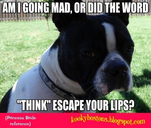 Check out blog: kookybostons.blogspot.com; FB: http://on.fb.me/14LnHlm; and twitter: http://bit.ly/1bz5HKc