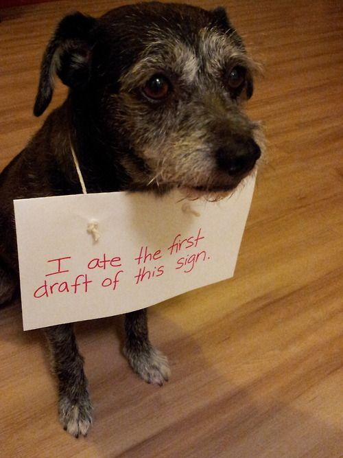 I Ate The First Draft Of This Sign Dog Shaming Shame What