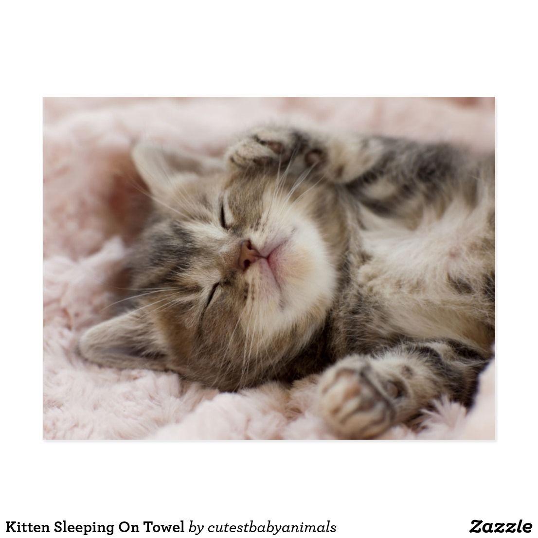 Sleepy Kitten Postcard Zazzle Com Sleeping Kitten Sleepy Kitten Kittens Cutest