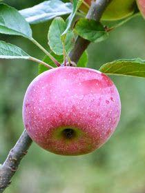 Chic, chic, chocolat...: Pachade aux pommes Ariane {crêpe épaisse originaire du Cantal}