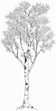 Aspen Tree Drawing Google Search Bobbie Luz