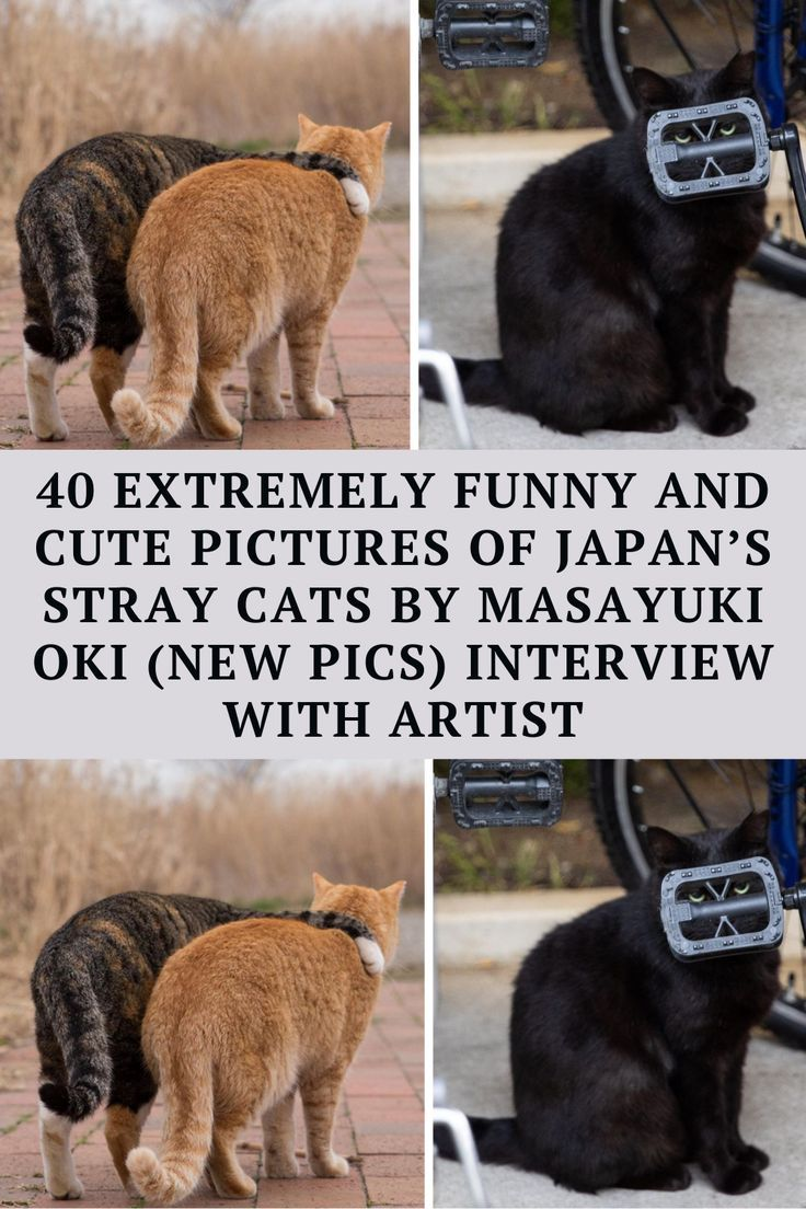 Japan loves cats, and cats probably love living in Japan. It's a mutual love, in other words. Even the strays seem to live the good life over there. They're well fed by people,