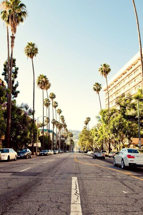 California palm trees street iphone wallpaper Palm trees