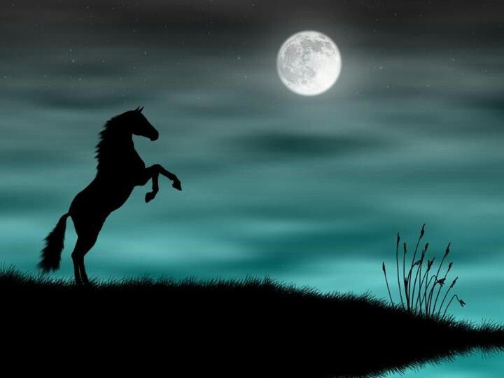 Wild Horse Silhouette In A Red Sunset Desktop And Mobile Wallpaper