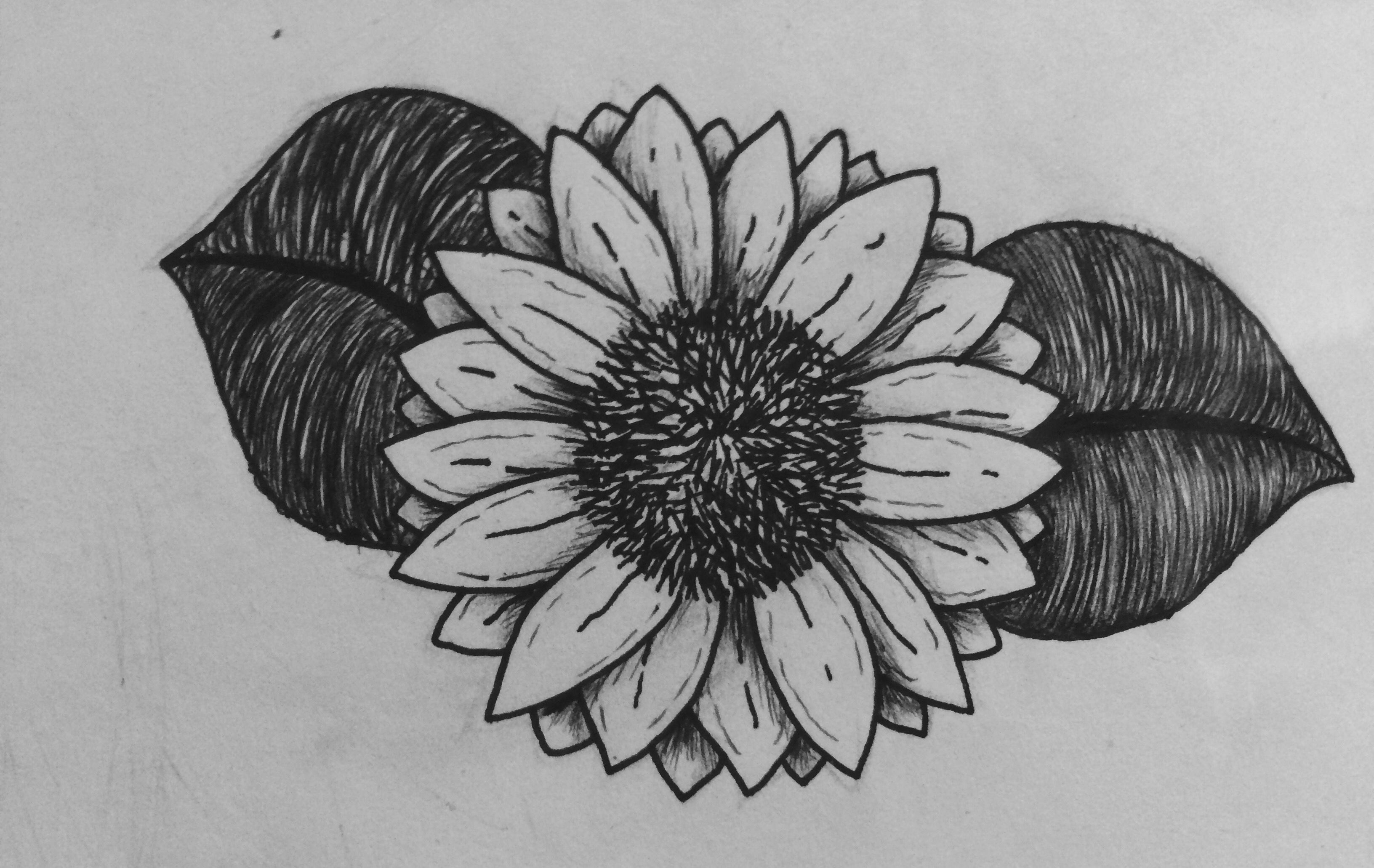 Sunflower Flower Sun Drawing Draw Blackandwhite Pencil Love