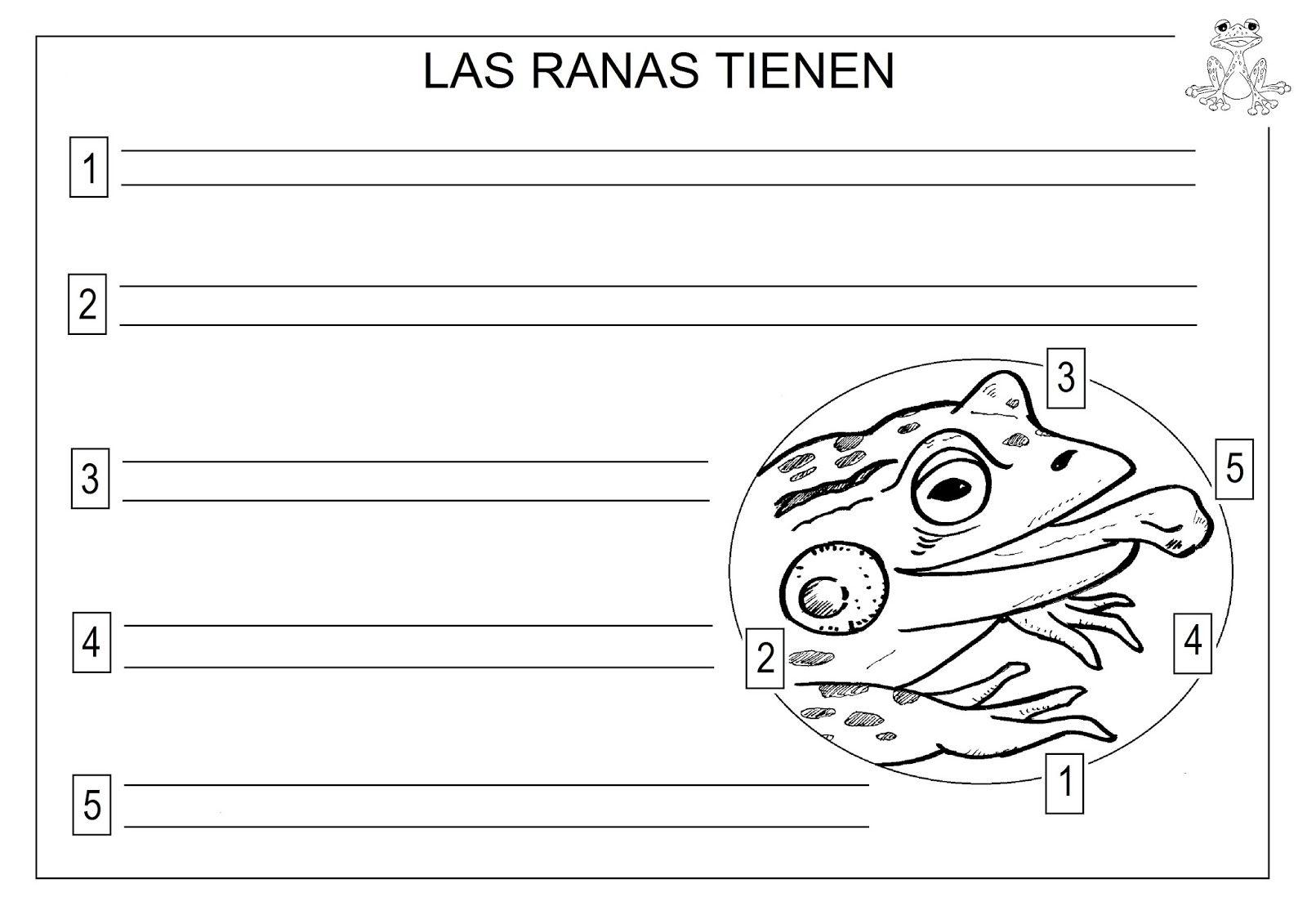 El Monstruito en Monteagudo: Proyecto La Rana. Morfología ...