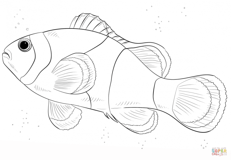Free Printable Coloring Pages Throughout Clown Fish Coloring Pages Ikan Badut Lukisan Ikan